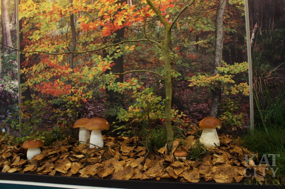 """""""H2OLAS"""" – wystawa Lasów Państwowych wHydropolis"""