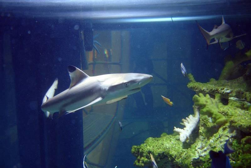 Rekiny zakwarium wArkadach Wrocławskich pojechały doLondynu