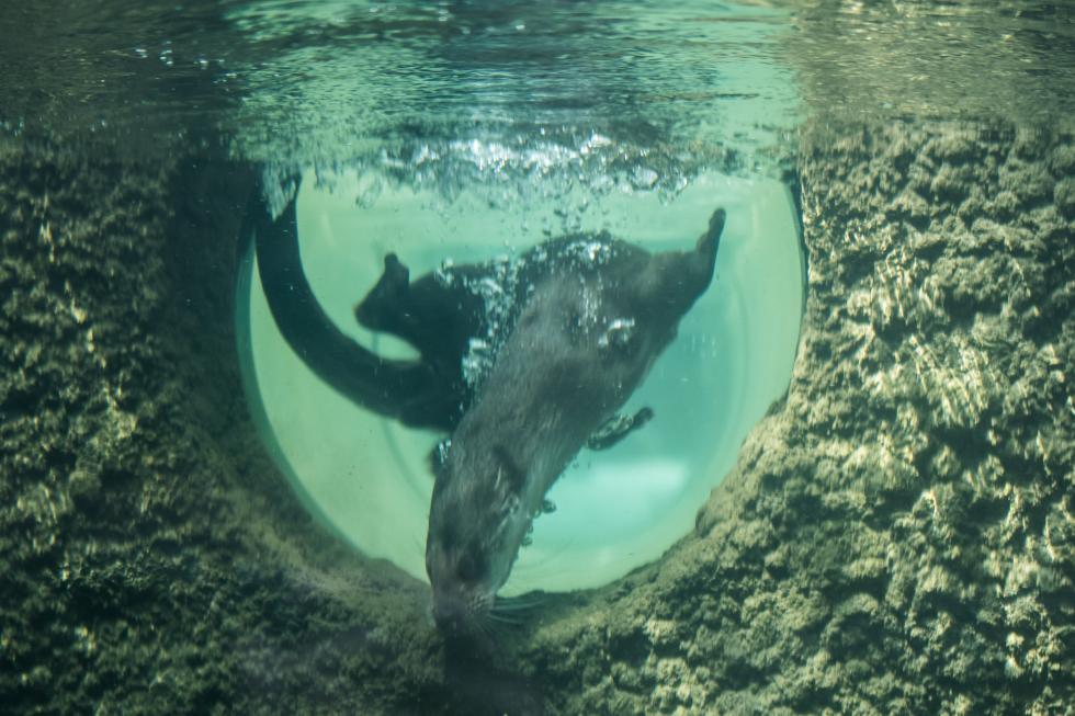 Wydry wrocławskiego zoo mają nowy wybieg