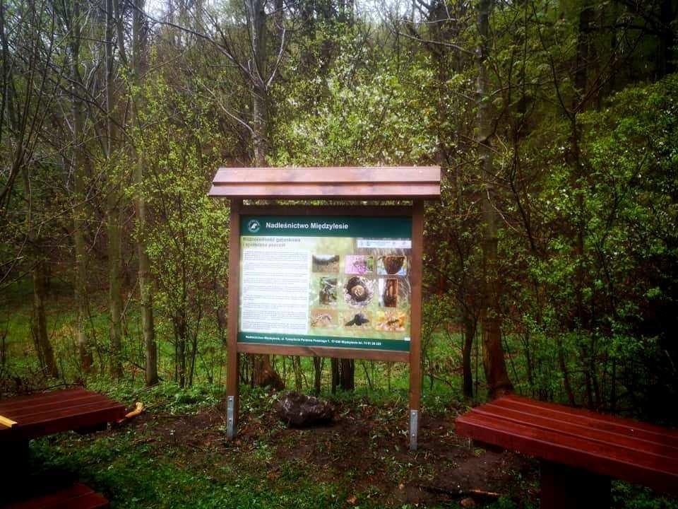 Gdzie mieszka Makatka zbójnica? Szukajcie odpowiedzi na szlakach wsudeckich lasach