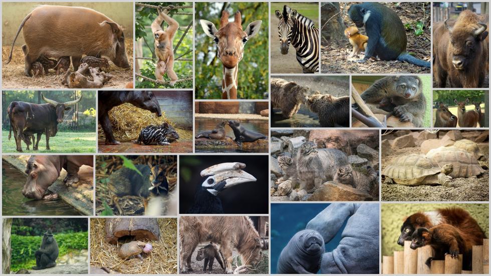 Najsłynniejsze matki zwrocławskiego zoo  inajmłodsze (czary) mary